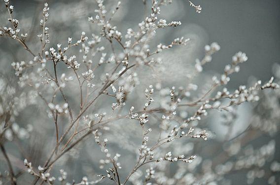 Blüte von Jessica Berendsen