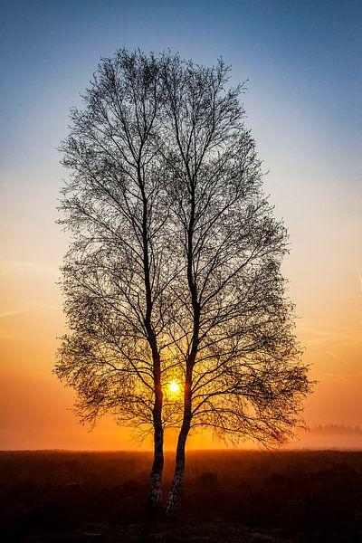 Zonnetje door de bomen van Wilma Wijnen