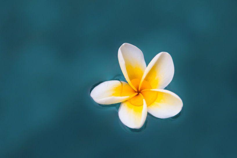 Zen-Blume von Dennis Claessens