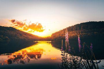 Zonsondergang bij meer met bloemen in Duitsland in aard van Fotos by Jan Wehnert