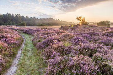 Heidelandschap met spinneweb. von Anneke Hooijer