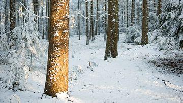 Winterzon in bos von Jelle Dekker