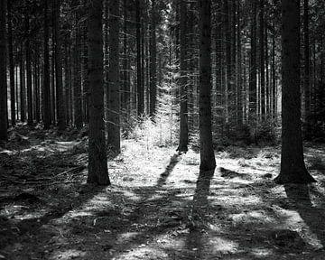 Junge Bäume von Jurrian Tanke