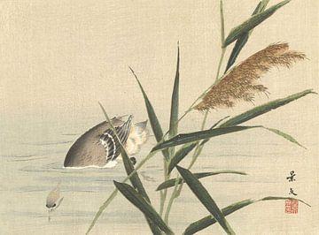 Ente beim Tauchen im Schilf von Matsumura Keibun - 1892