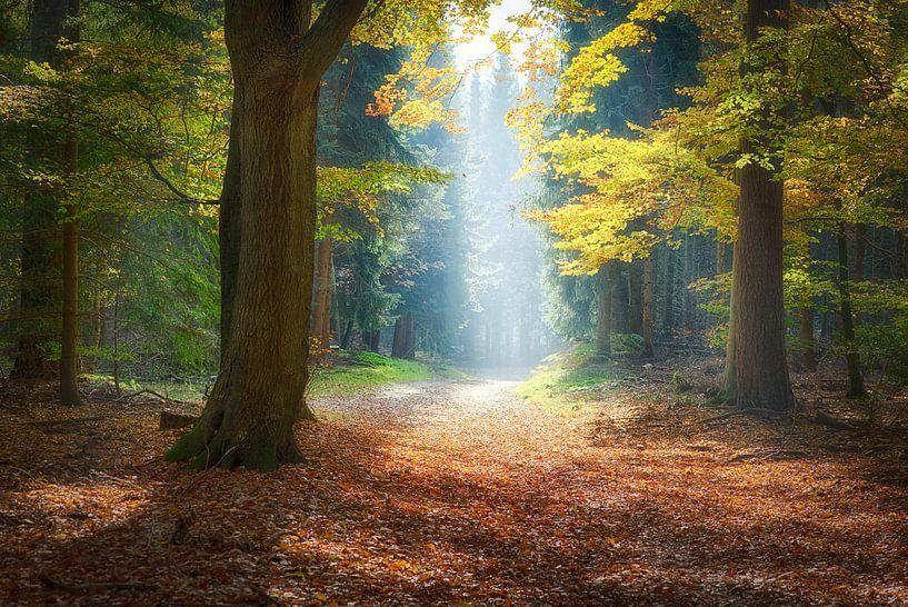 Naar het licht van Roelof Nijholt