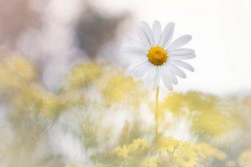 Wonderful Yellow van Bob Daalder