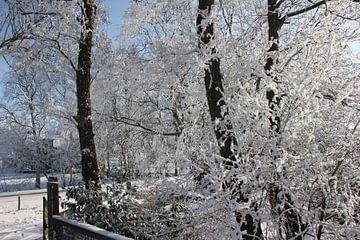 Rijp en sneeuw op de bomen van Fotografie Fryslân
