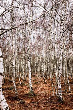 Berken bos van Mayra Pama-Luiten