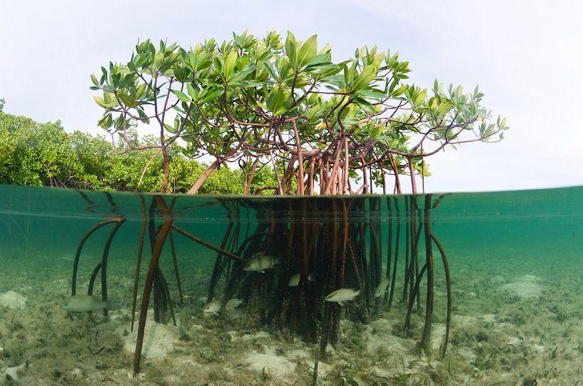 Mangroven van Joost van Uffelen