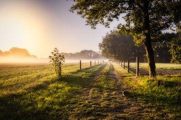 Der neblige Weg zu einer Pferdeweide von Jamesrl Photography