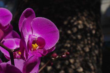Orchid van Rob van Keulen