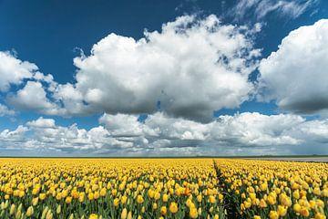 Tulpen met stapelwolken boven Hollands Polder Landschap van Fotografiecor .nl