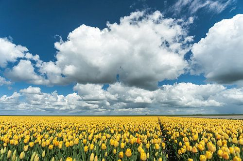 Hollands tulpen veld met stapelwolken