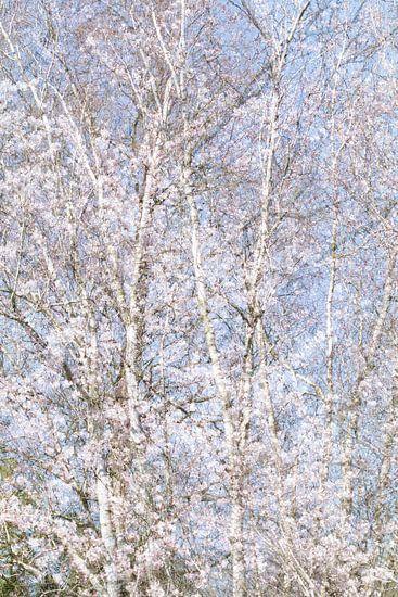 Lentebloesem abstract van Teuni's Dreams of Reality