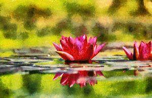 Rode waterlelies