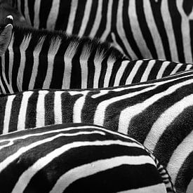 Zebra's van Leonie Versantvoort