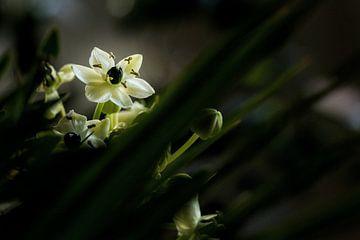 Blume von Rob Bergman