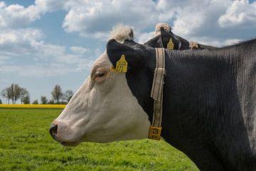 Dromerige koe van Yvonne van Driel