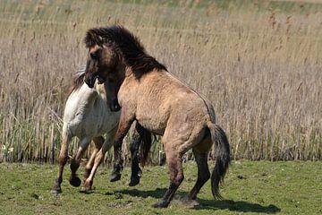 Wilde paarden II van Frank de Ridder