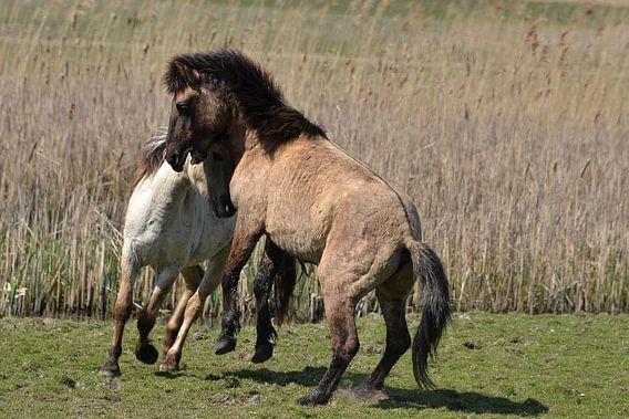 Wilde paarden II