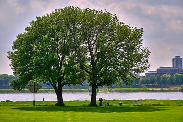 Zomerdag bij de Poller Wiesen in Keulen aan de Rijn - 2 bomen per kroon van 77pixels