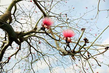 Schöne blühende Blume von einer Pflanze in der Landschaft Kubas. von Tjeerd Kruse