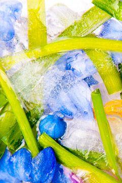 Kleurrijke planten en bloemen bevroren in ijs van Jacqueline Groot