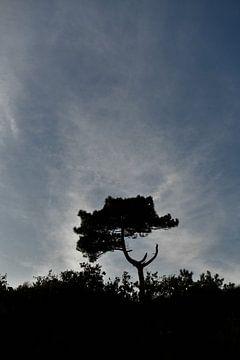 eenzame boom van Bert Bouwmeester