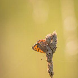 Mooie kleine vlinder. van Anne-Marie Pannekoek