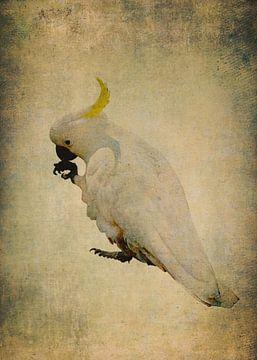 Gelber Kamm Kakadu 5 von Anouschka Hendriks