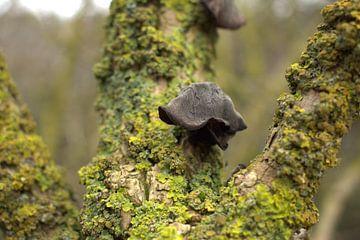schwarzer Pilz am Zweig von Marvin Van Haasen