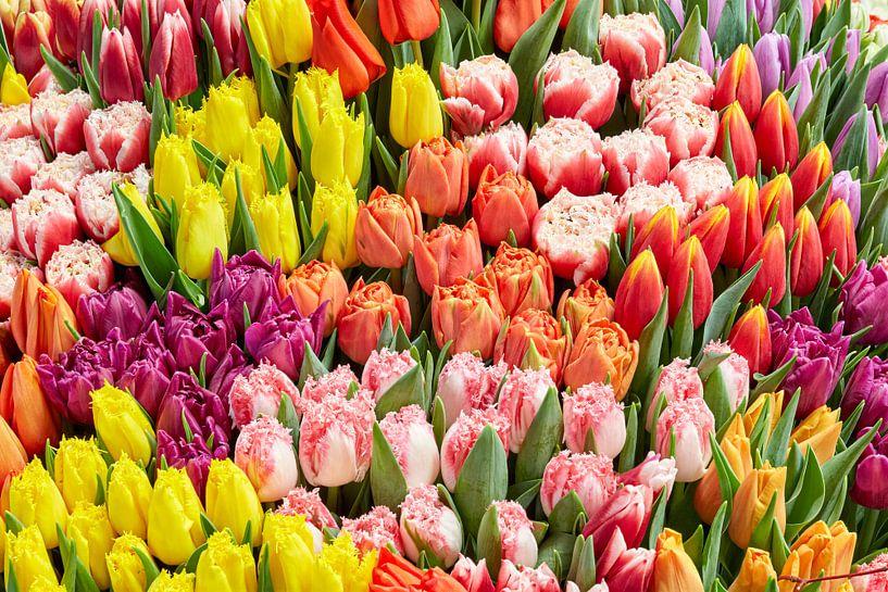 diversiteit aan gekleurde tulpen van eric van der eijk