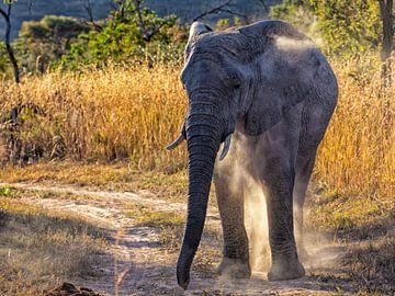 Elefant mit aufblasendem Staub von Daan van der Heijden