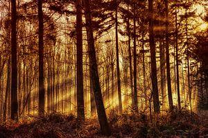 brand in het bos