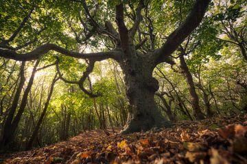 L'arbre à verrue sur Edwin Mooijaart