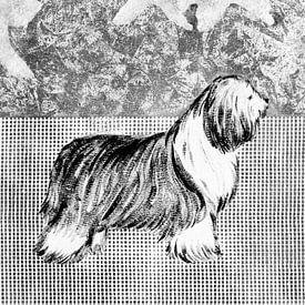 Bearded Collie sur Lida Bruinen