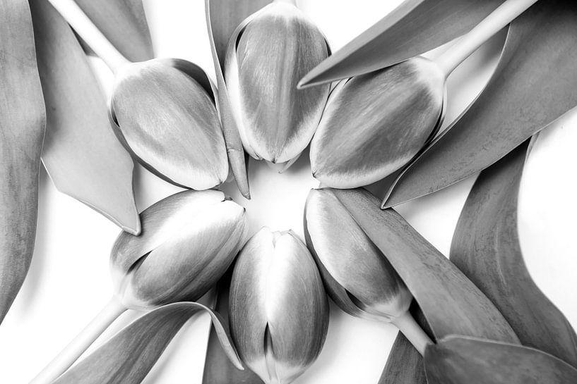 Tulpen in een cirkel van Ratna Bosch