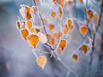 Herbstfarben mit einer Reifeschicht von Rick Kloekke