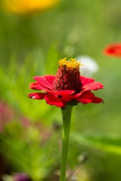 Blumenwelt 2 van Dirk Herdramm