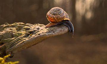 De grote uitdaging van de slak! van Christa Thieme-Krus