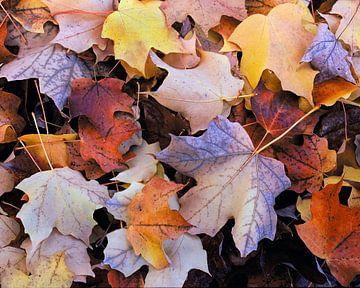 Herfst van Jean Mertens