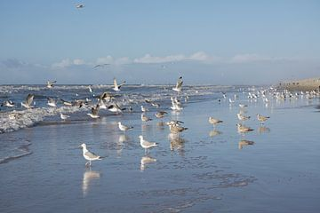 Möwen an der Küste von Barbara Brolsma