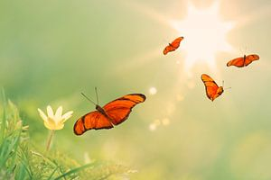 De vier oranje vlinders van