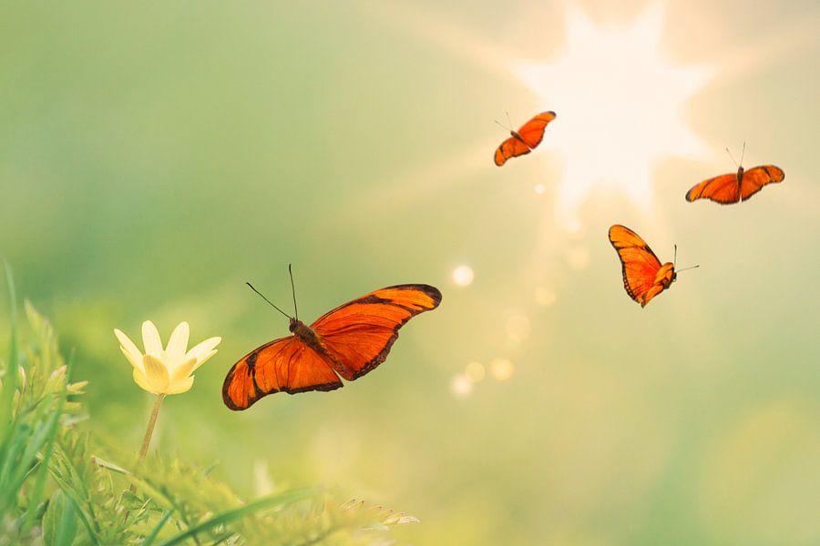 De vier oranje vlinders