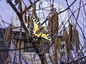Spring -  vlinder van Christine Nöhmeier