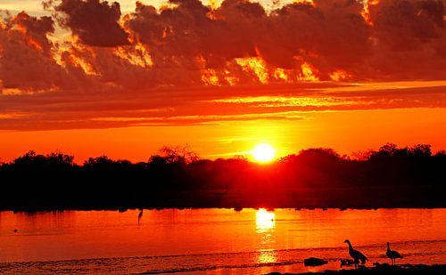 Sonnenaufgang mit Nilgänsen, Etosha-Nationalpark Namibia von
