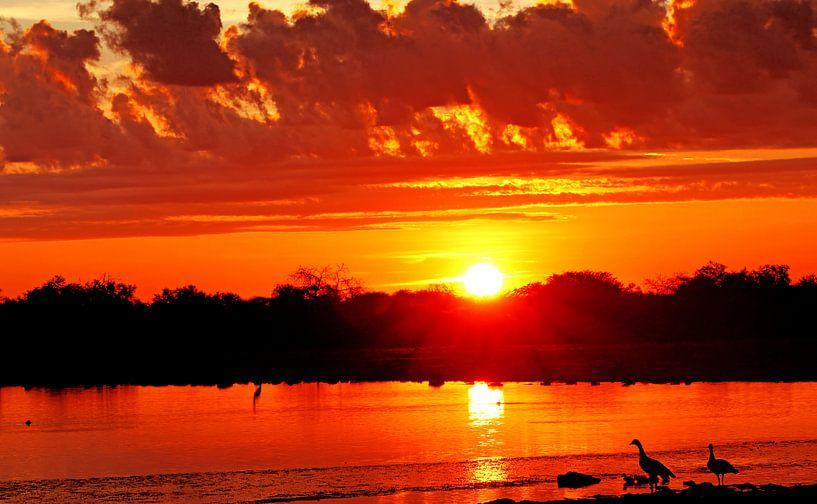 sunrise with nile geese at Etosha National park, Namibia van W. Woyke