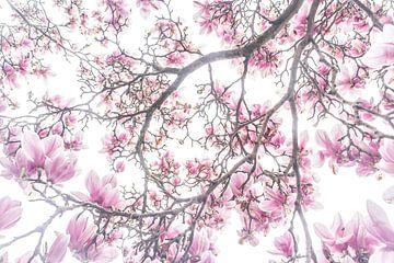 Bloesem in het voorjaar van Marianne Jonkman