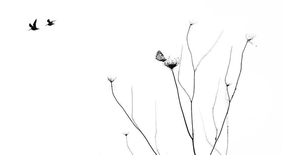 Minimalistisch stilleven met vogels en vlinders