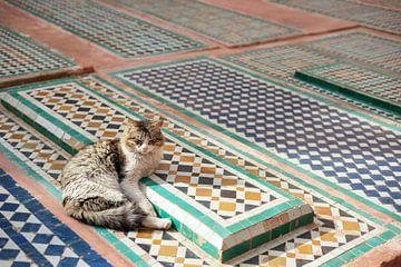 Streetcats of Marrakesh van Mariska Luth